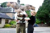 Two Wings @ Strathblane Falconry
